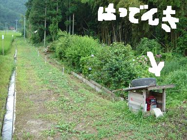 20050731-5.jpg