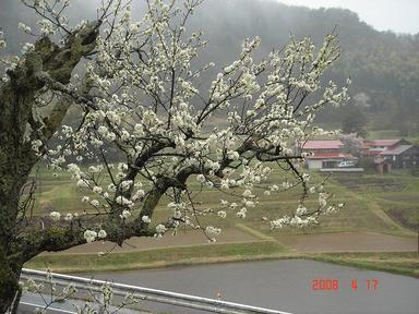 20080417-3.jpg
