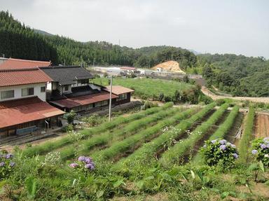 2010707-8.jpg
